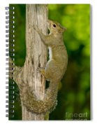 Eastern Gray Squirrel Spiral Notebook