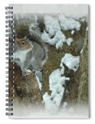 Eastern Gray Squirrel - Sciurus Carolinensis Spiral Notebook