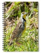 Eastern Meadowlark Spiral Notebook
