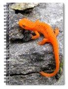 Morphing In Massachusetts Spiral Notebook
