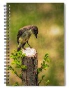 Eastern Phoebe Spiral Notebook