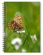 Eastern Pine Elfin Butterfly Spiral Notebook