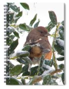 Eastern Rufous-sided Towhee Spiral Notebook
