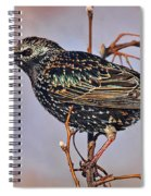 Common Starling Spiral Notebook