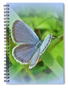 Eastern-tailed Blue Butterfly - Cupido Comyntas Spiral Notebook