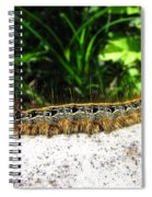 Eastern Tent Caterpillar Spiral Notebook