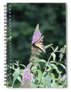 Eastern Tiger Swallowtail Butterfly -  Featured In Wildlife Group Spiral Notebook