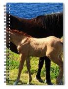 Ebony And Ivory Spiral Notebook