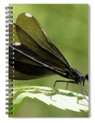 Ebony Jewelwing Fluttering For Male Spiral Notebook