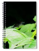 Ebony Jewelwing Male Spiral Notebook