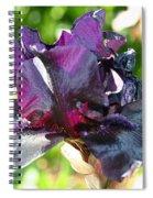 Ebony Violet Spiral Notebook