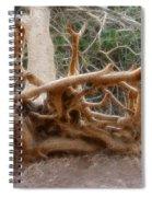 Eccentric Tree Root Growing In Ein Gedi Spiral Notebook