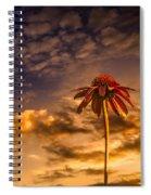Echinacea Sunset Spiral Notebook