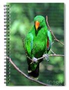 Eclectus Parrot-1 Spiral Notebook