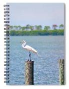 Egret In Dunedin Florida Spiral Notebook