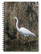 Egret In Marsh In Display  Spiral Notebook