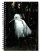 Egret Of Sanibel 2 Spiral Notebook