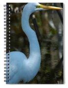 Egret Of Sanibel 3 Spiral Notebook
