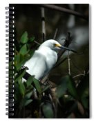Egret Of Sanibel 5 Spiral Notebook
