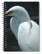Egret Of Sanibel 6 Spiral Notebook