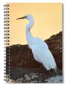 Egret On Dunedin Causeway Spiral Notebook
