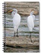Egrets 4649 Spiral Notebook