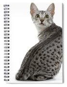 Egyptian Mau Cat Spiral Notebook