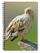 Egyptian Vulture Spiral Notebook