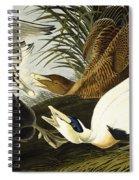 Eider Ducks Spiral Notebook