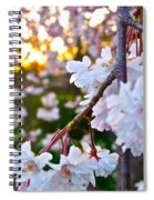 Einstein's Blossoms Spiral Notebook