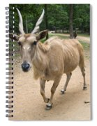 Eland Antelope Out In The Open Spiral Notebook