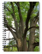 Elder Oak Spiral Notebook