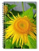 Elecampane Daisies Spiral Notebook