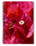 Electric Pink Bougainvillea Spiral Notebook