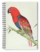 Electus Parrot On A Bamboo Shoot Spiral Notebook