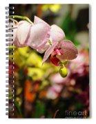 Elegance At The Market Spiral Notebook