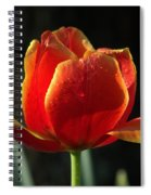 Elegance Of Spring Spiral Notebook