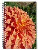 Elegant In Orange Spiral Notebook