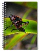 Elegant Sylvan Katydid Spiral Notebook