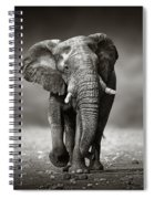 Elephant Approach From The Front Spiral Notebook