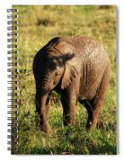 Elephant Calf Spiral Notebook