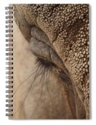 Elephant Lashes Spiral Notebook