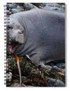 Elephant Seal Of Ano Nuevo State Reserve Spiral Notebook