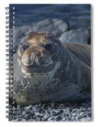 Elephant Seal Pup... Spiral Notebook