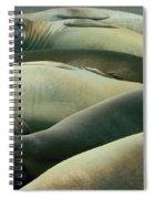 Elephant Seal Pups Spiral Notebook