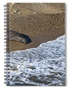 Elephant Seal Sunning On Beach Spiral Notebook