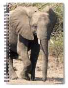 Elephant Stroll Spiral Notebook
