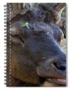 Elk Chuckle Spiral Notebook