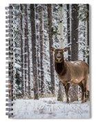 Elk In Jasper Spiral Notebook