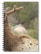 Elk Sky Gaze Spiral Notebook